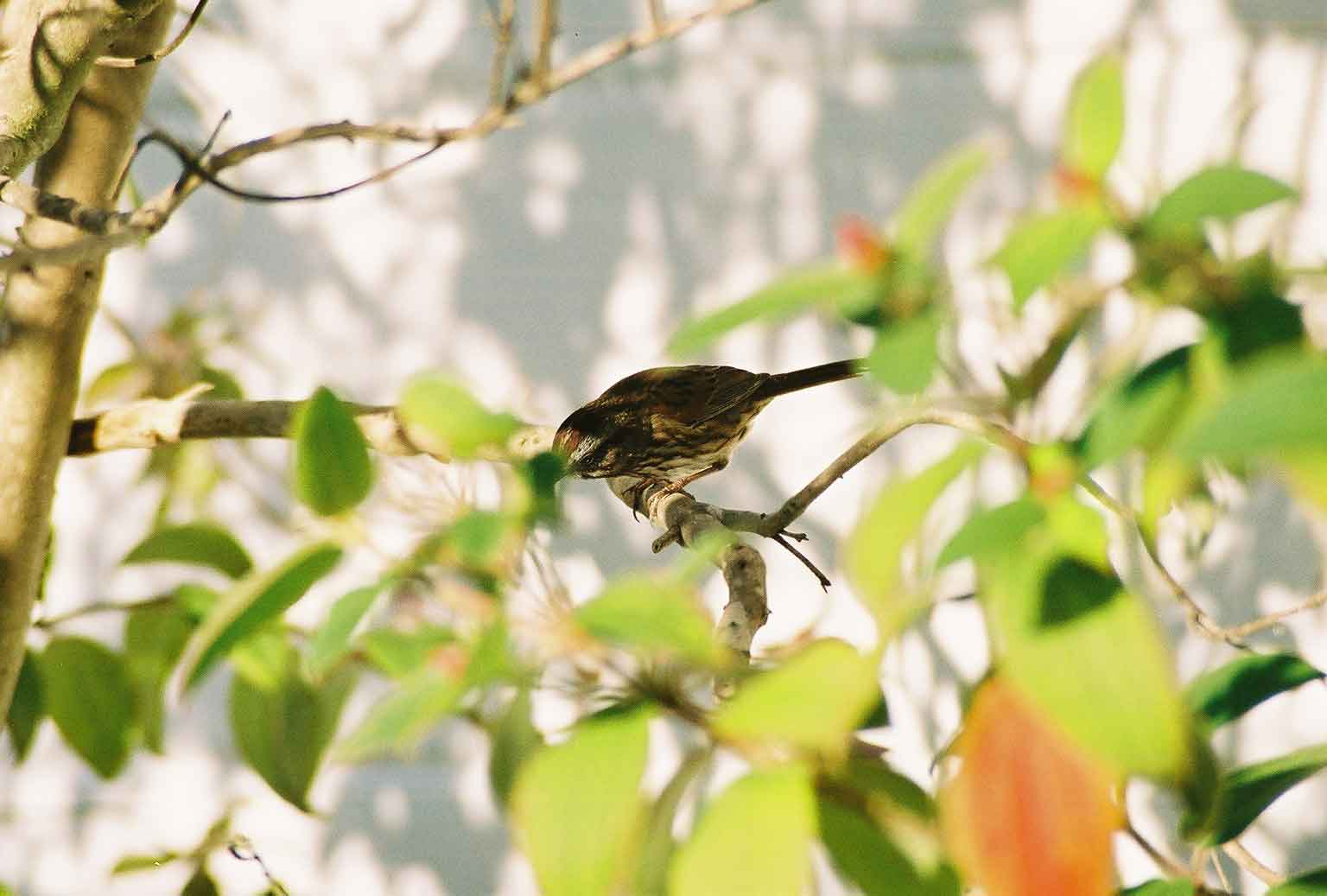 Sparrow in the tree