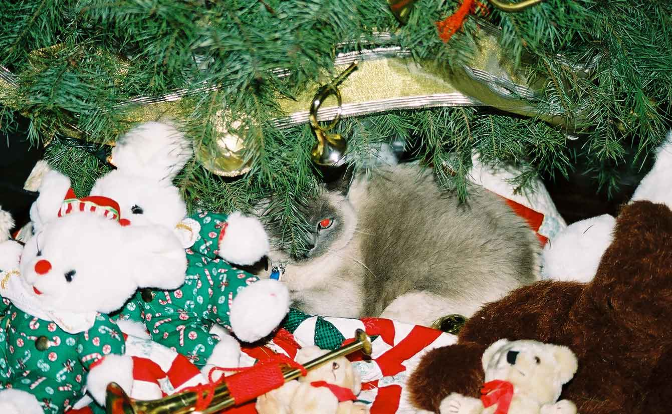 Sybil under the tree